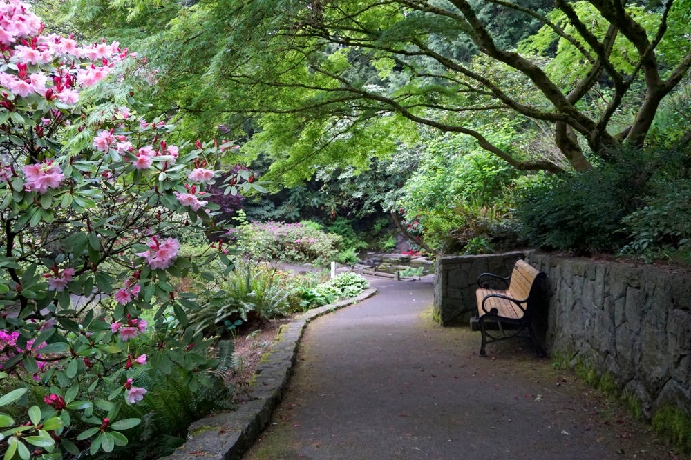 The Complete Guide to Portland Gardens | Crystal Springs Rhododendron Garden