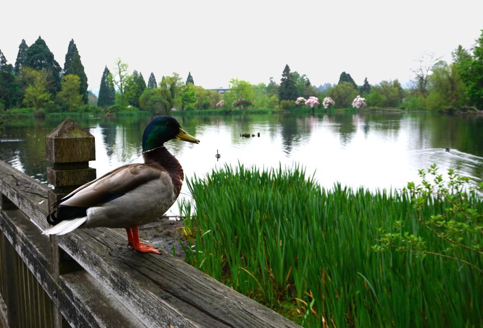 Portland Gardens | Crystal Springs Rhododendron Garden Wildlife