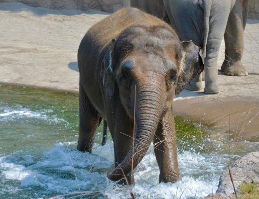 Things to do in Portland to entertain and educate kids | See the elephants at the Oregon Zoo