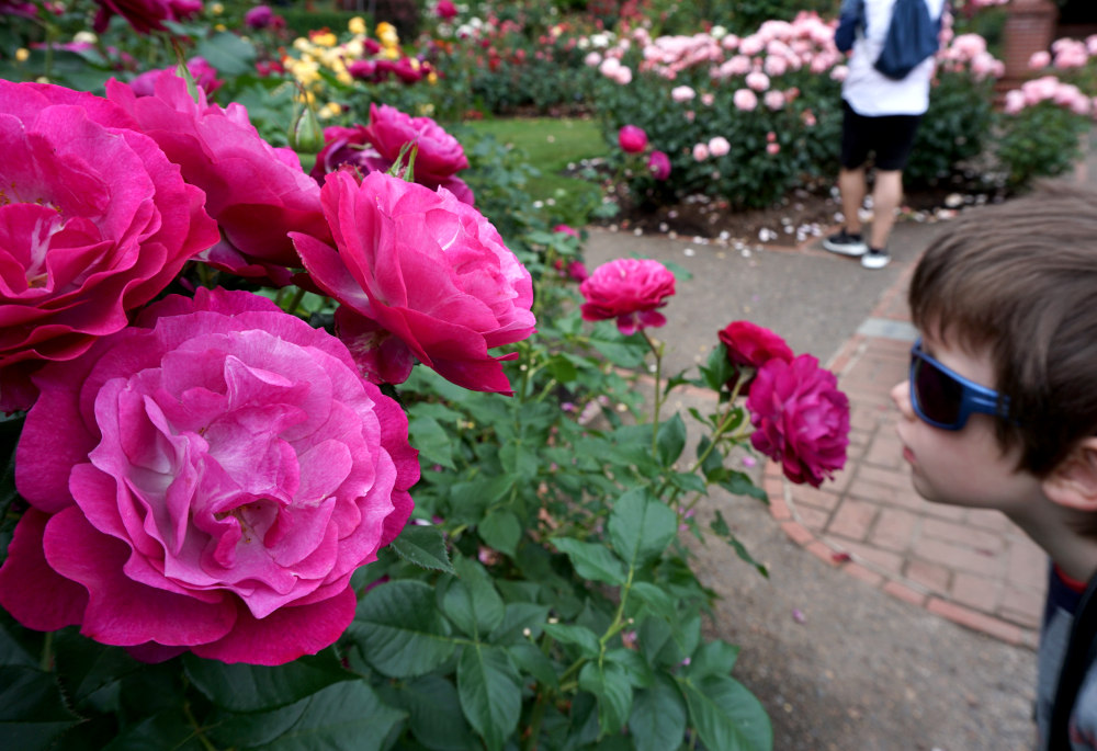 The complete guide to Portland gardens | The International Test Rose Garden
