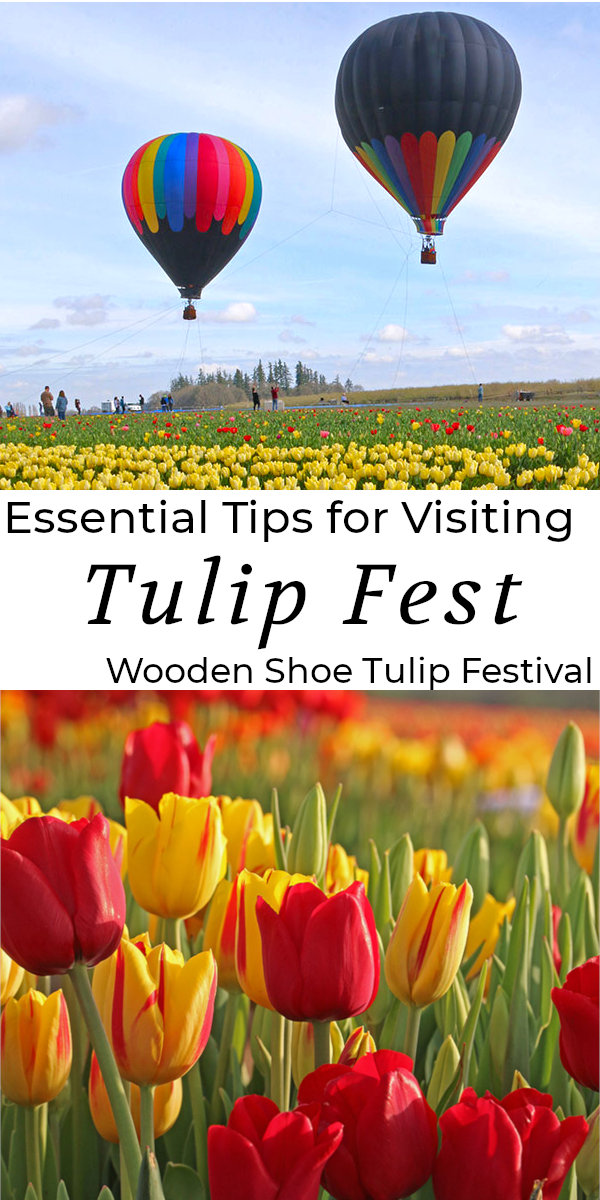 Essential Tips for visiting the Wooden Shoe Tulip Festival