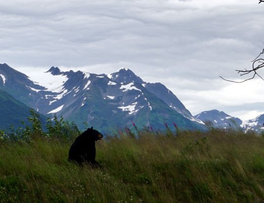 Alaska Wildlife Conservation | Day Trips from Anchorage