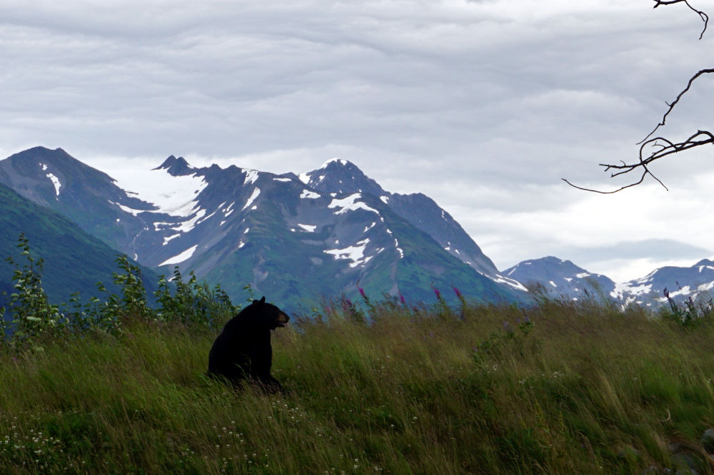 Alaska Wildlife Conservation | Day Trips from Anchorage Alaska