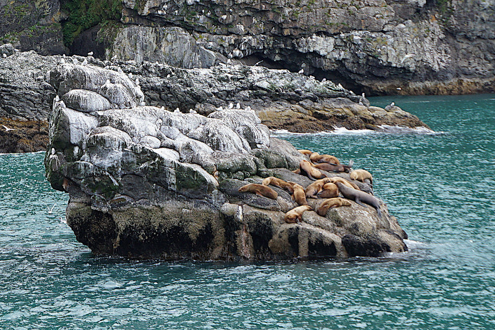 Things to do in Seward Alaska | Sea lions in Resurrection Bay