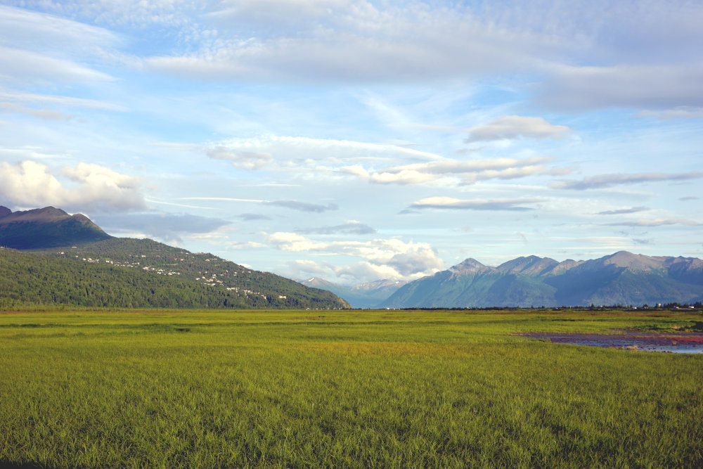 Potter Marsh | Things to do in Anchorage Alaska
